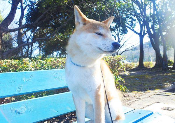 散歩で深める犬との絆