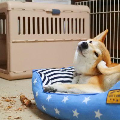 犬のストレス解消