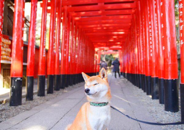 三光稲荷神社、境内まで犬連れOK