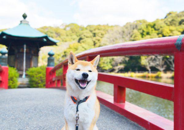 定光寺公園の弁天橋