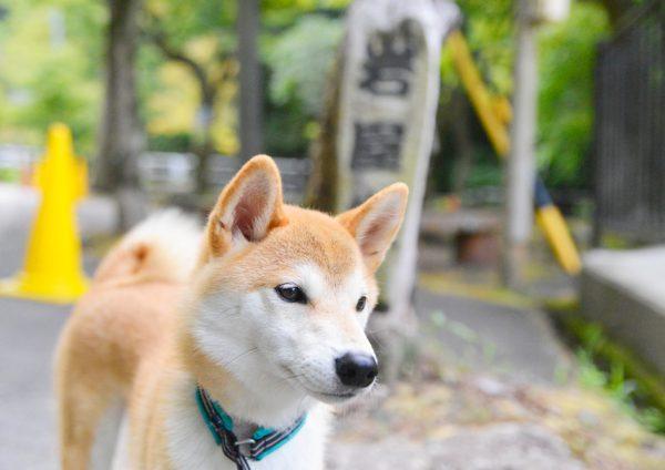 犬連れで瀬戸市の岩屋堂公園へ