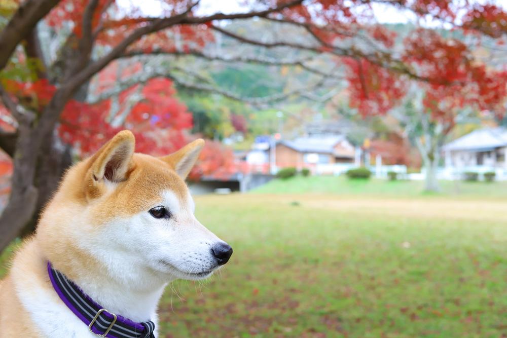 定光寺公園紅葉