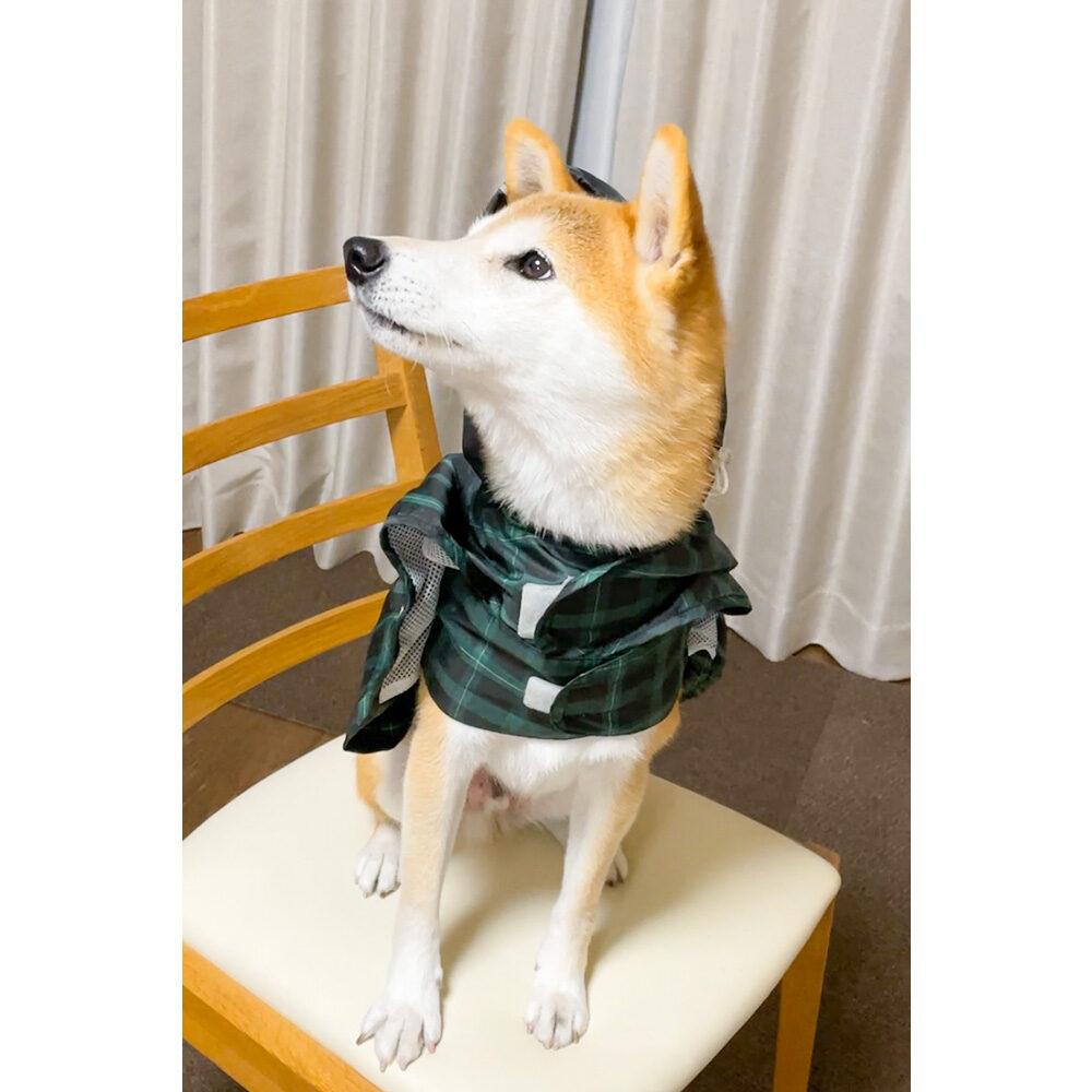 服を嫌がる柴犬のカッパの着せ方