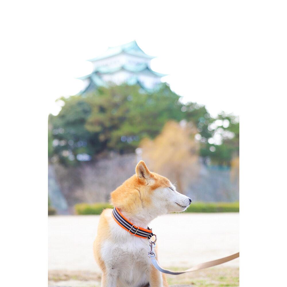 名古屋市名城公園でお散歩