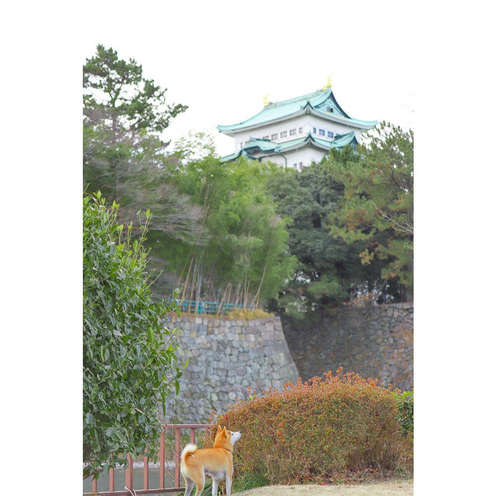 名城公園でお散歩