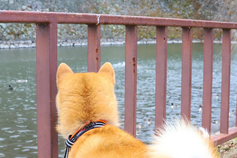 名城公園 名古屋城のお堀
