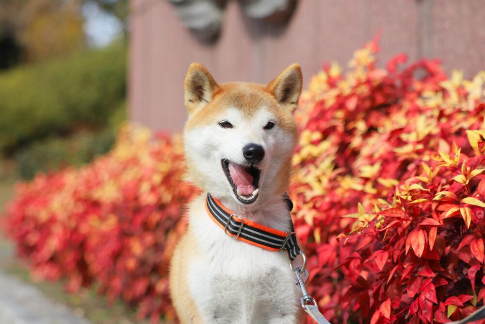名古屋市名城公園で犬の散歩