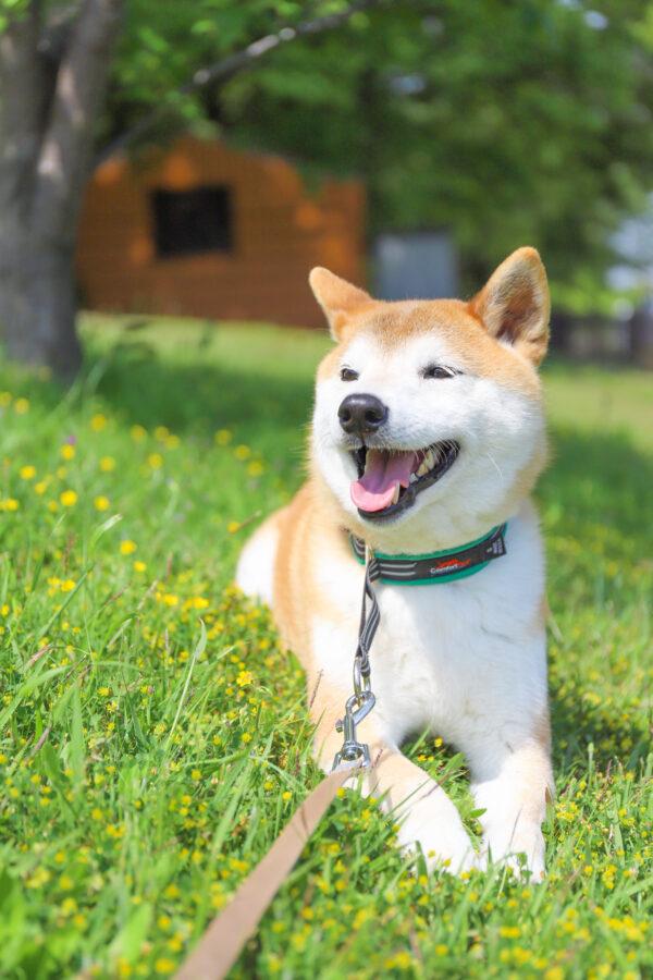 散歩で犬との関係性を築く