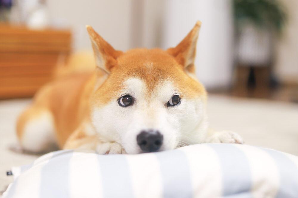 犬の気持ち