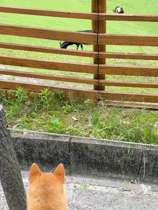 小牧 ちびっこ動物村